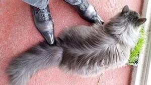 igor-cat